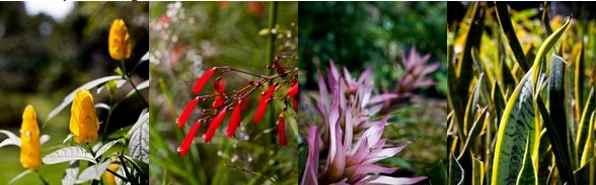 Villa Crisanta Garden Resort